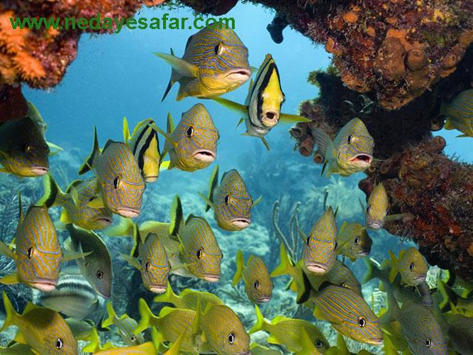 تور سواحل مرجانی کیش